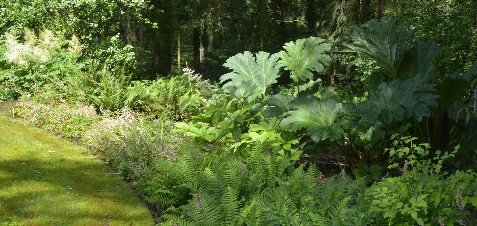 A large rural garden in Devon