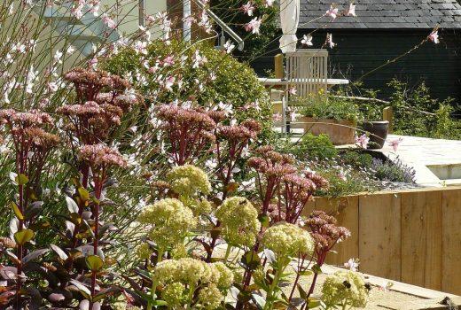 A productive terraced garden in Devon